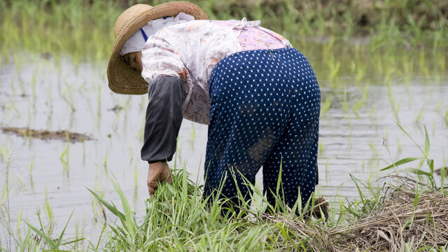 パラレルワークおすすめ職業は農業